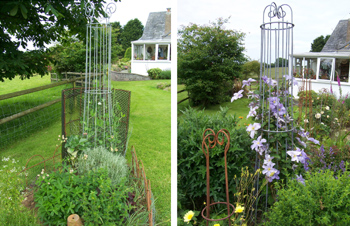 steel sweet pea flower bean support stands